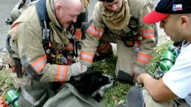 VIDEO: Leah, a Border Collie puppy, was given oxygen for an hour after being pulled from a burning house.