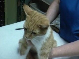 Watch: Defenseless Cat Shot With Arrow