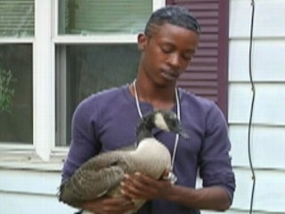 Watch: Injured Goose Adopts Illinois Family