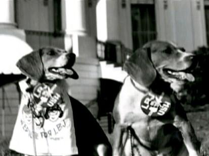 President Johnsons dogs