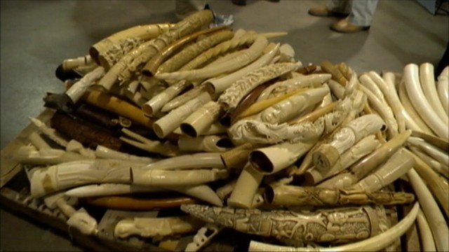VIDEO: U.S. Fish and Wildlife Service will destroy six tons of ivory to highlight the illegal trade.