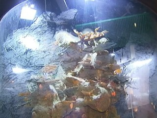 Watch: Florida Casino Closes After Giant Aquarium Leaks