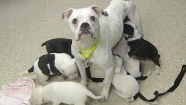 VIDEO: Ohio man charged with animal abandonment.
