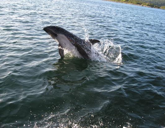 Kofman Whale SS B