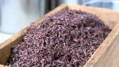VIDEO: ABCs Genevieve Shaw Brown checks out a hot new food trend: eating insects.