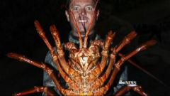 VIDEO: Man Has Change of Heart After Catching Nearly 12Lb Lobster