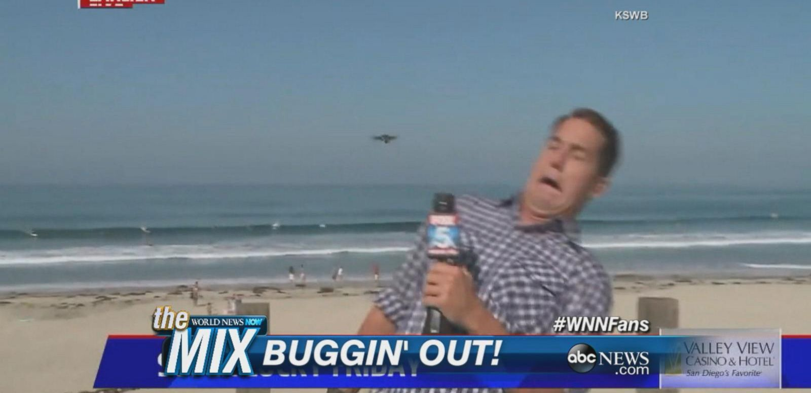 VIDEO: Weatherman Brad Willis had an on-air run-in with a very large insect.