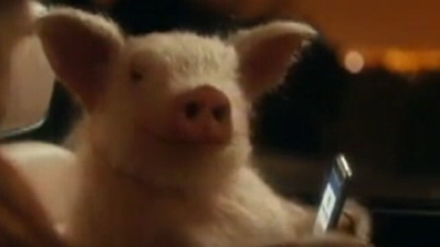 Video: GEICO Commercial: Funny or Promoting Bestiality?