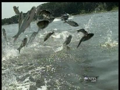 CAN EATING ASIAN CARP STOP THEIR SPREAD?