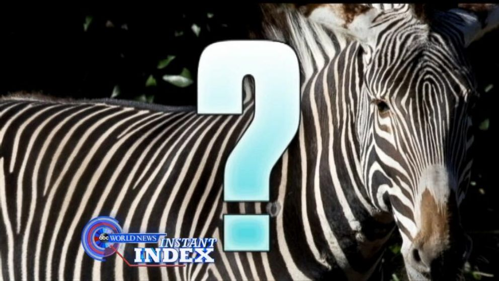 VIDEO: Zebra Stripes May Act as Bug Repellent