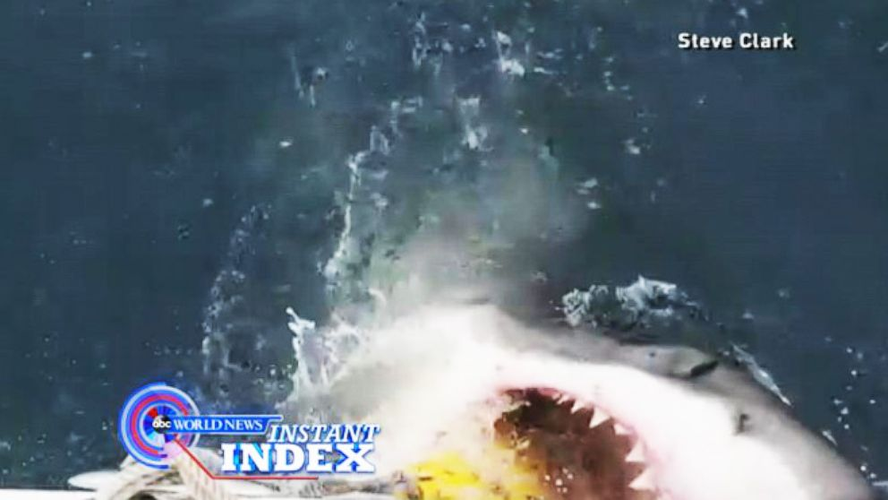 VIDEO: Instant Index: Close Encounters With a Great White Shark on the Jersey Shore