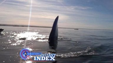 VIDEO: Instant Index: A Whale of a Day and a Scare for Kayakers Off the Coast of Argentina