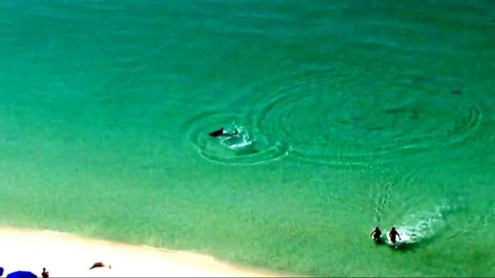 Shark Scare On A Florida Beach Video