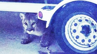 VIDEO: Instant Index: Mountain Lion in Salt Lake City