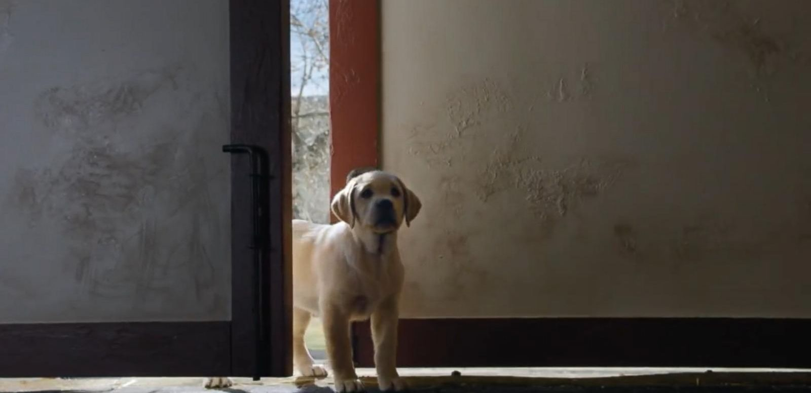 VIDEO: Super Bowl Ads Kick Off Early This Year