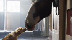VIDEO: Secrets of the Super Bowl Budweiser Puppy Commercial