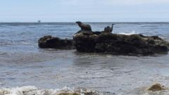VIDEO: Race Against Time for Wildlife Impacted by Oil Spill