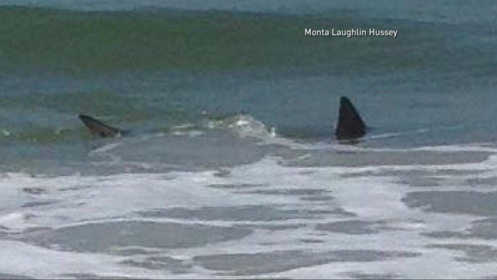 Terrifying Shark Attacks Off The Coast Of North Carolina Video