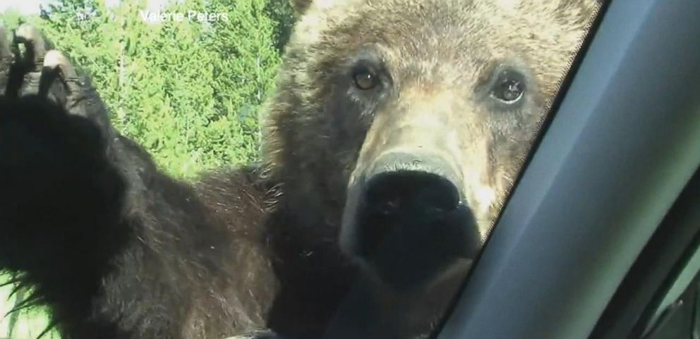 VIDEO: Face to Face With a Grizzly