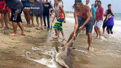 VIDEO: Video Shows Huge Shark Off Coast of North Carolina