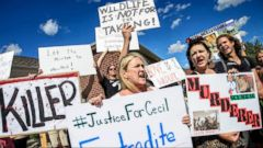 VIDEO: Authorities in Zimbabwe are Requesting Extradition of Dentist Walter Palmer Over Lion Death