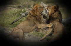 VIDEO: Big Game Hunter Who Shot Lion Faces Scrutiny