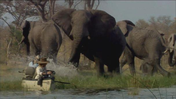 VIDEO: High School Sweethearts Dedicate Their Lives to Saving Elephants