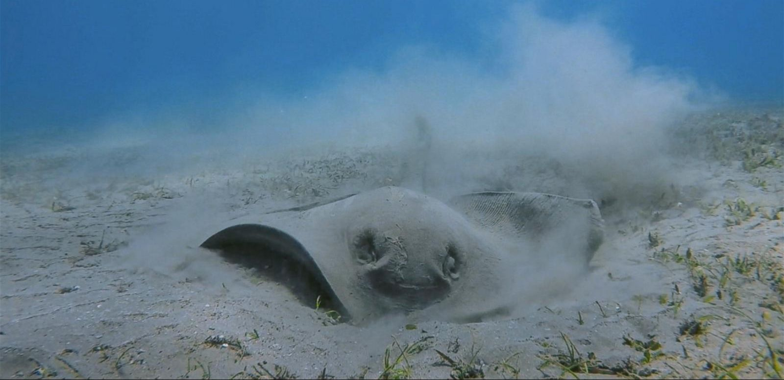 VIDEO: Beachgoers Warned to Look Out for Sting Rays