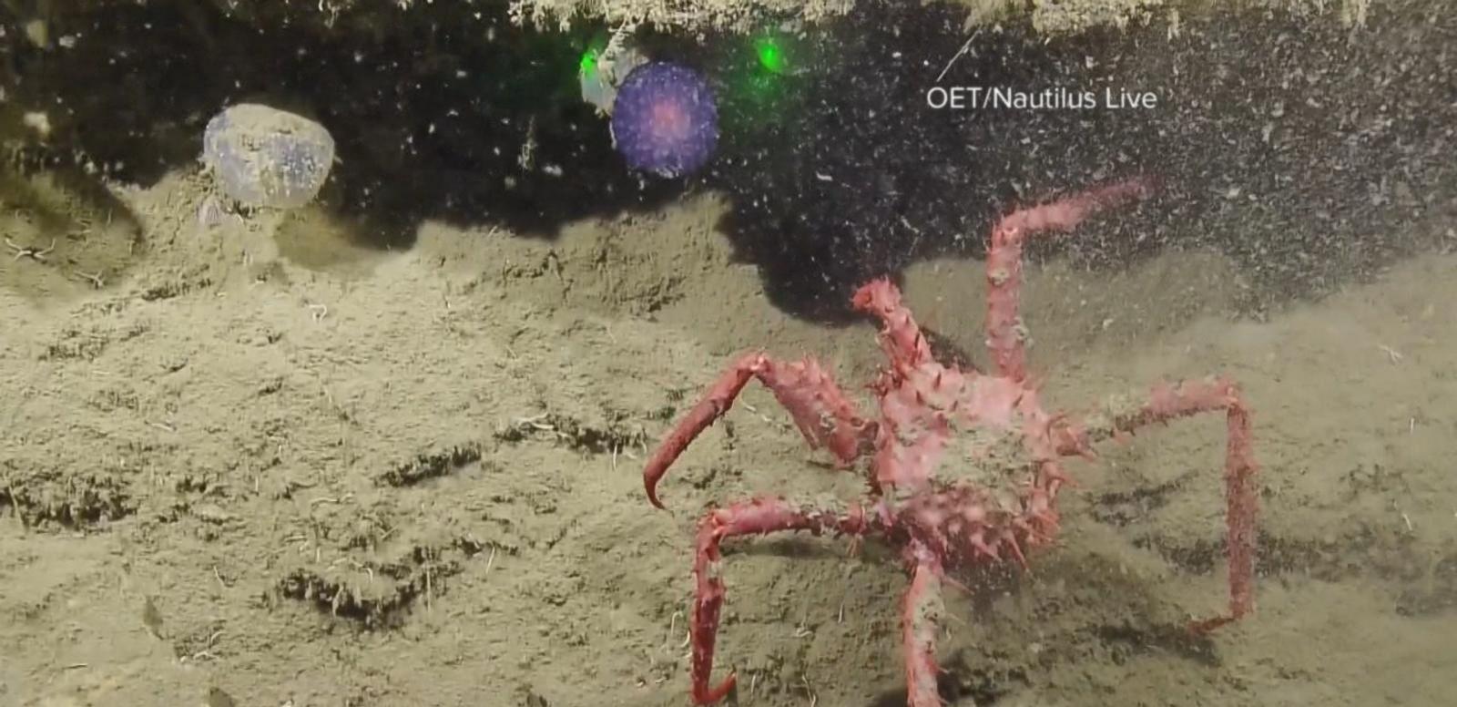 VIDEO: Mysterious Underwater Orb Baffles Scientists