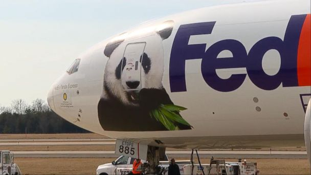 VIDEO: Bao Bao the panda says final goodbye to America