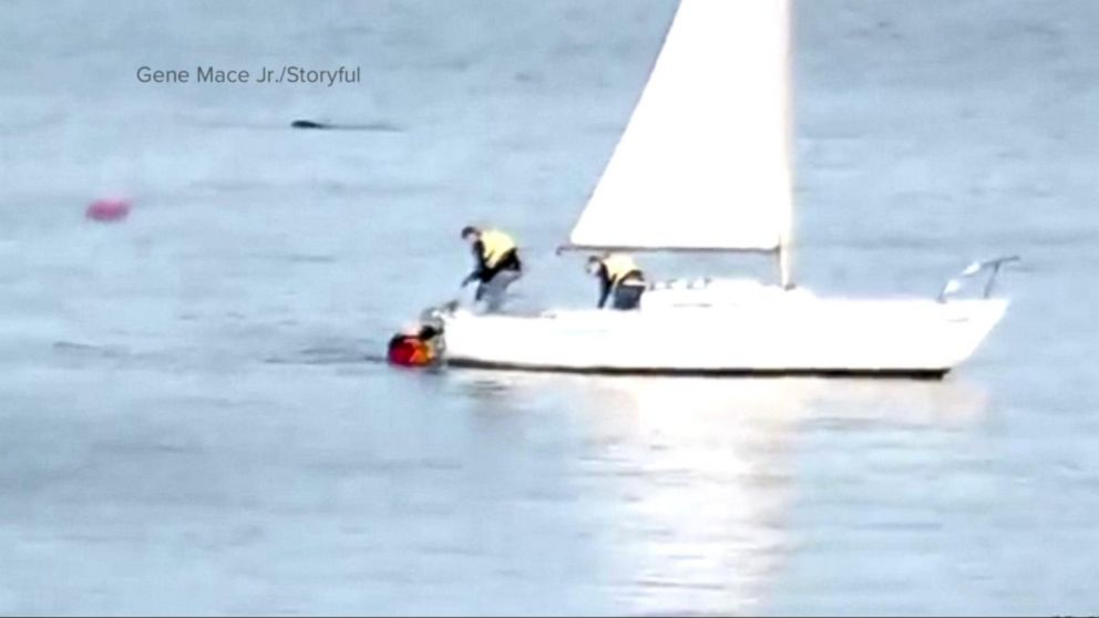 VIDEO: Kayaker attacked by great white shark