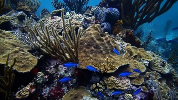 VIDEO: American scientist works to save coral reefs