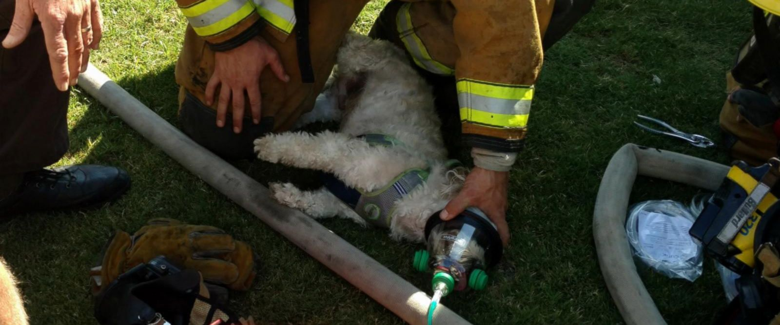 VIDEO: Little dog in California saved by firefighters