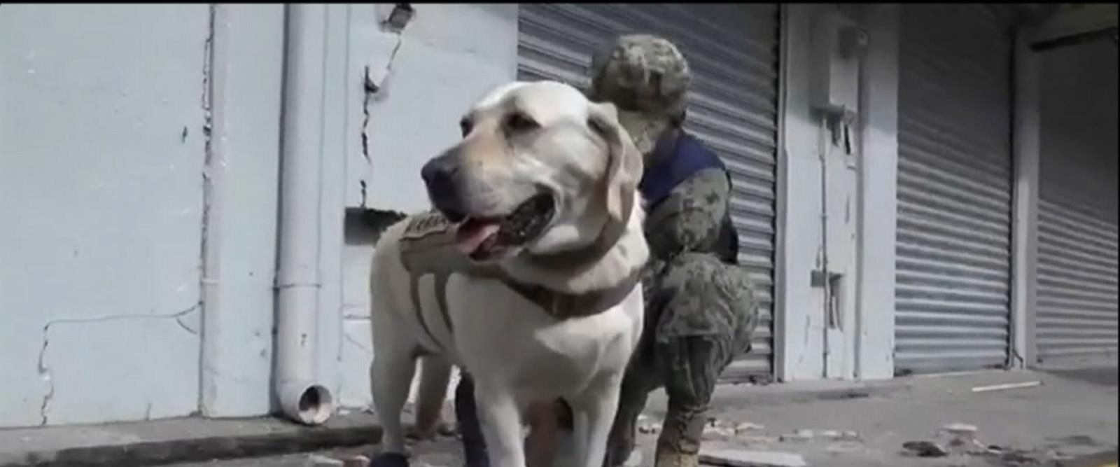 VIDEO: 4-legged hero amongst the first responders in Mexico City