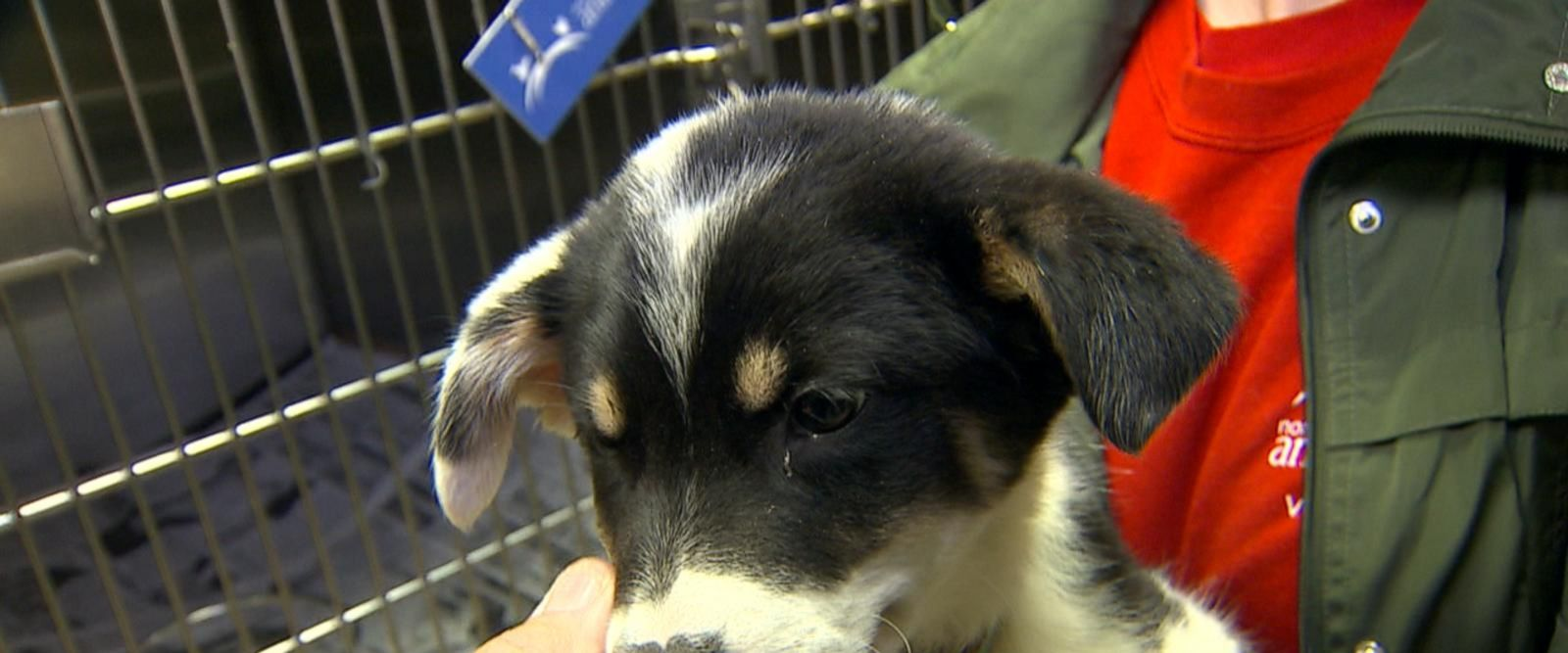 VIDEO: Massive effort to help animals in need of homes