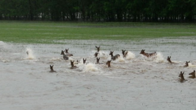 VIDEO: Wildlife Invades Due to Flooding