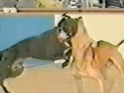 VIDEO: Supreme Court rules that selling films depicting animal cruelty is free speech.