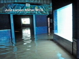 Watch: Flooded New York Aquarium May Evacuate Animals