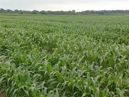 Field of plants