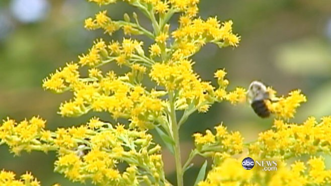 VIDEO: Linsey Davis reports on why spring 2011 may be the worst for allergy sufferers.