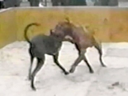 VIDEO: Is a law that bans the selling of depictions of animal cruelty unconstitutional?