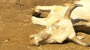 VIDEO: Severe drought in Northern Kenya