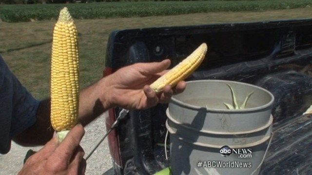 VIDEO: U.S. Department of Agriculture reports dire news for farmers for month of July.