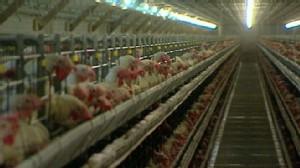 VIDEO: Filthy Farms in Iowa