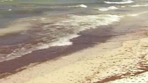 VIDEO: Gulf spill may be headed to Miami during what should be a busy tourist season.