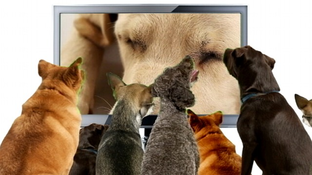 VIDEO: Dog TV aims to keep canines entertained when they are home alone.
