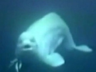 Watch: Instant Index: Whale Imitates Human Speech; Unfinished John Lennon Lyrics