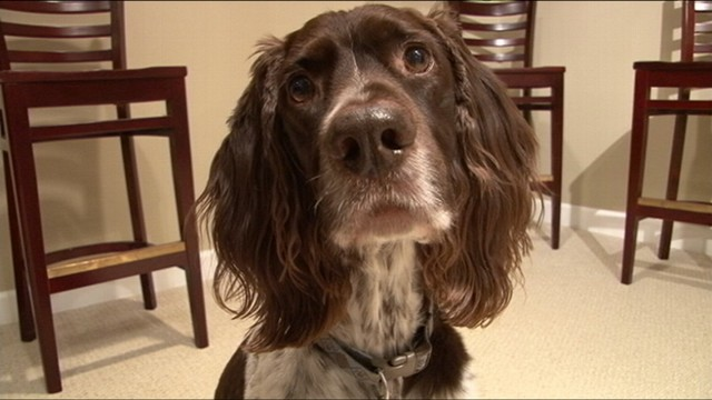 VIDEO: New website has exercises to test your pets intelligence.