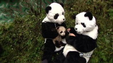 Порно в костюме пандаъ фото 395-480