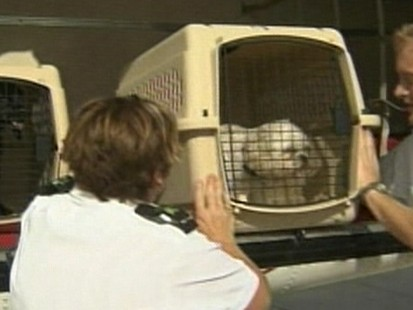 Pet travel airlines with the most dog deaths abc news for Air travel with dog in cabin
